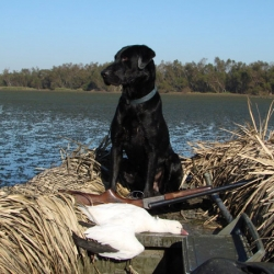 Pro-Drive Duck Hunting Dog